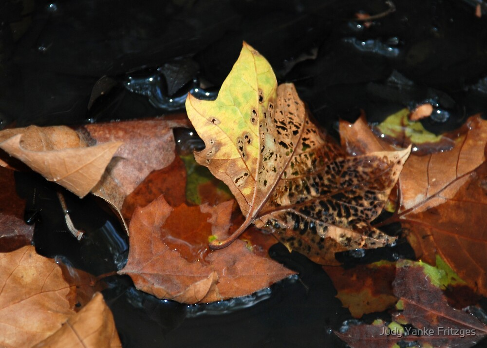 Decay by Judy Yanke Fritzges