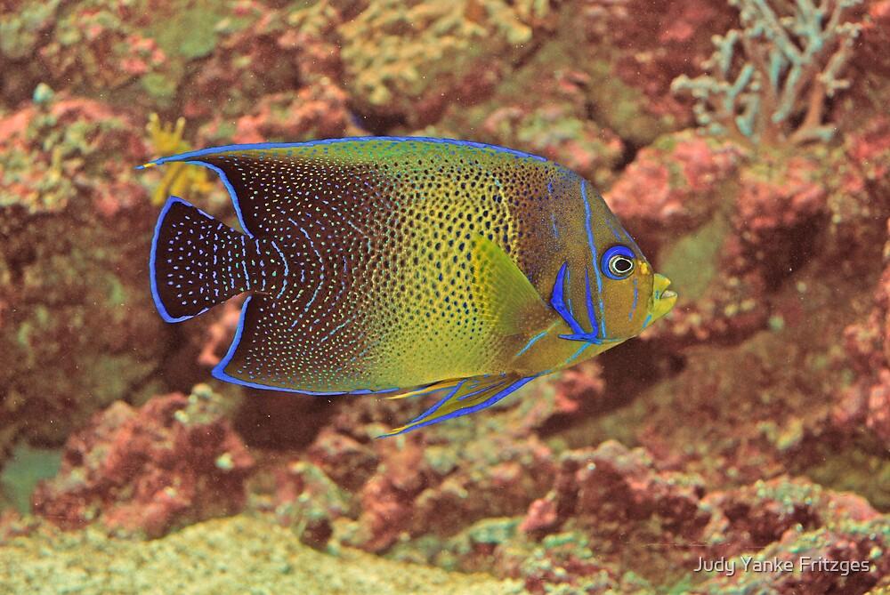 Serenity Fish by Judy Yanke Fritzges