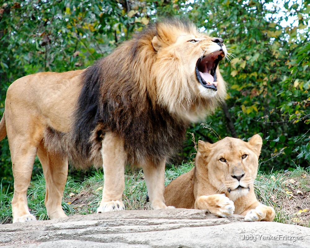 King of the Jungle by Judy Yanke Fritzges