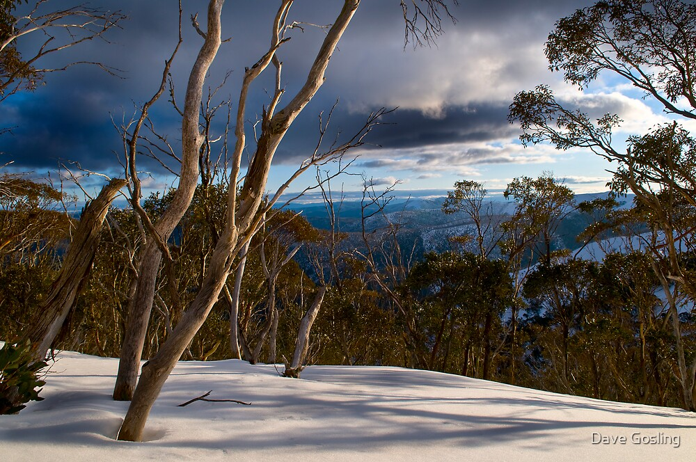 Snow View by Dave  Gosling Designs