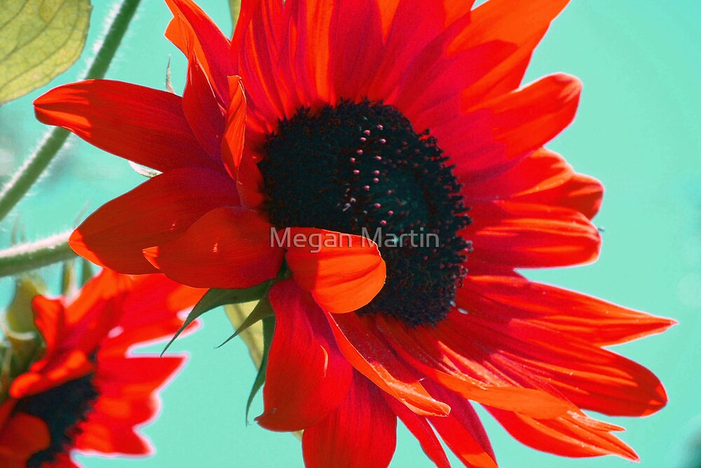 On Fire by Megan Martin