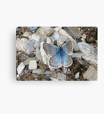 winged camuflage Canvas Print