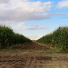 Harvest Time...Caldwell, Idaho. One Swath...14 rows by Diane Arndt