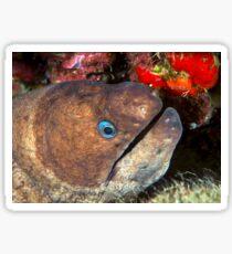 Moray eel Sticker