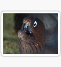Moray eel Sticker