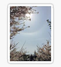Cherry Blossom In The Sun Sticker