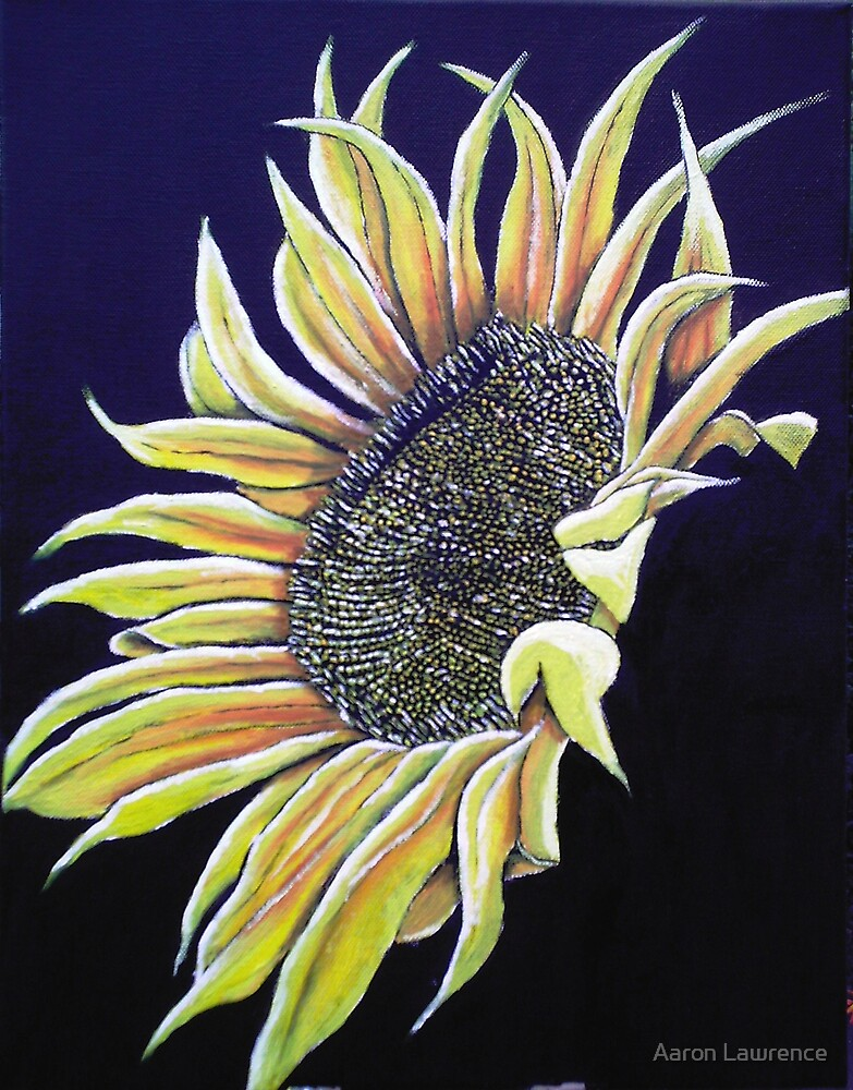 Sunflower Show by Aaron Lawrence
