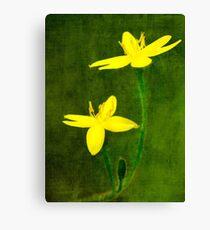 Golden Weather Grass Canvas Print