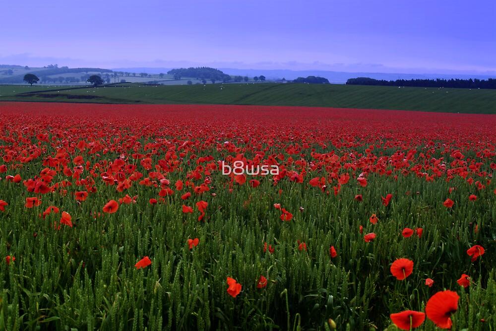 Poppy Field by b8wsa