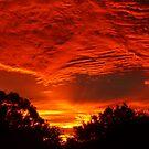 Glorious Sunrise by Trish Meyer