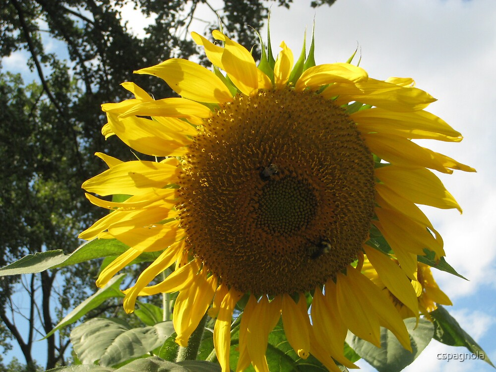 sunshine by cspagnola