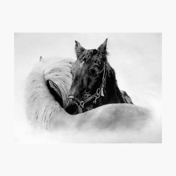 Horses by Mearqur Photographic Print