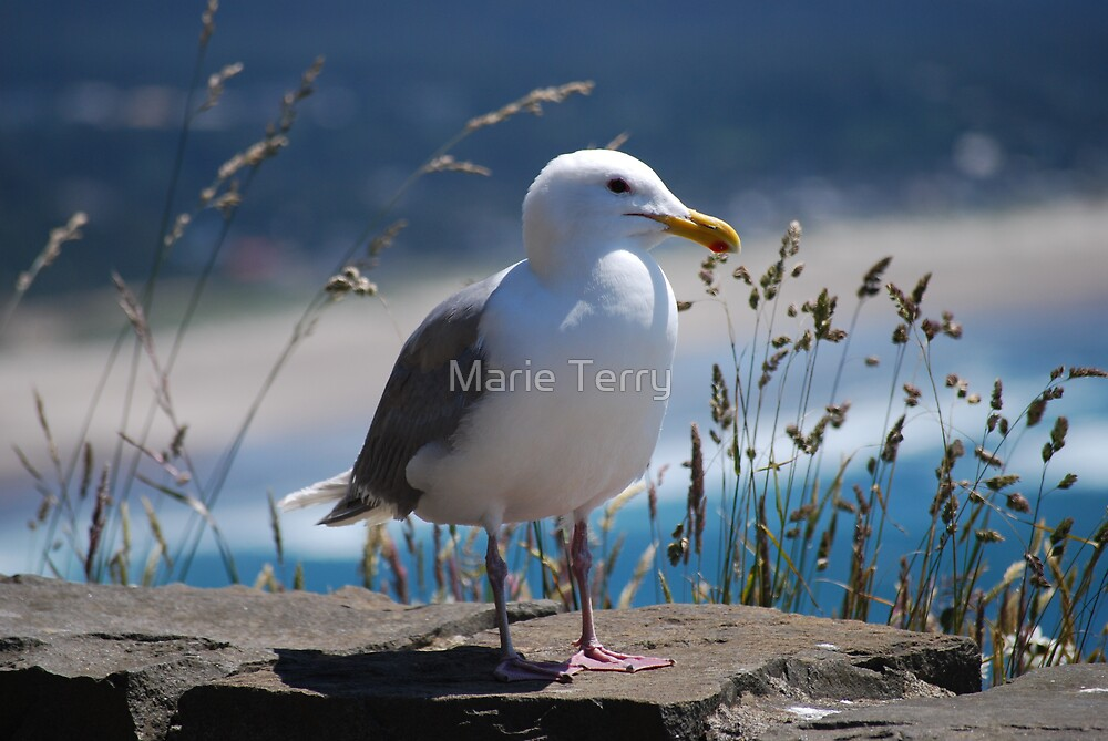 Seagull  by Marie Terry