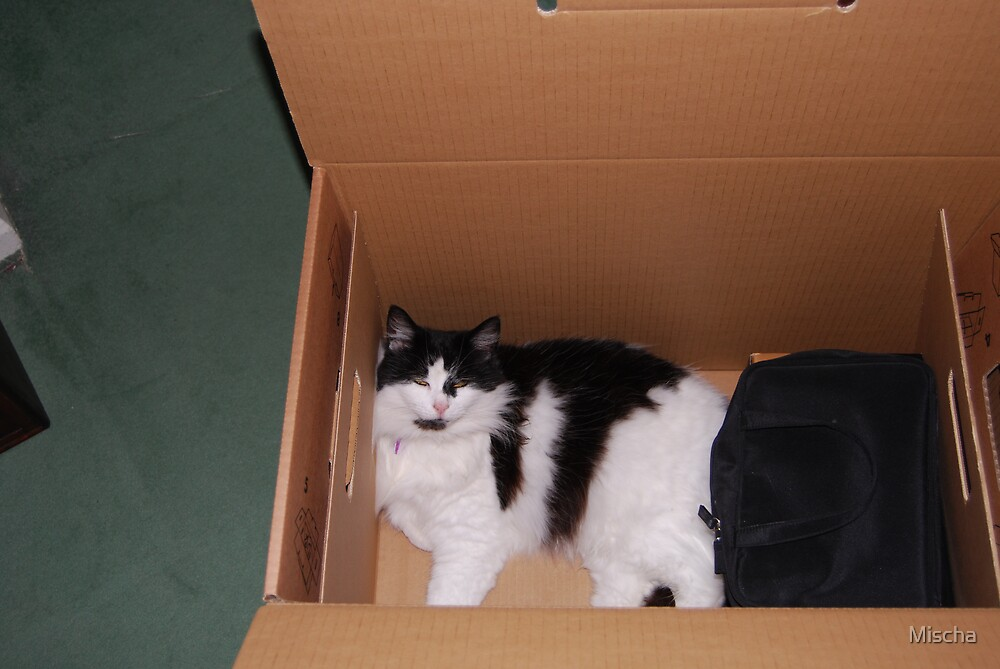 My new bed is a box by Mischa