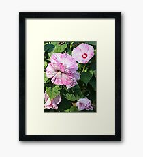 Hibiscus 2017-6 Framed Print