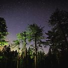 Quiet night in a pine forest by Victoria Avvacumova