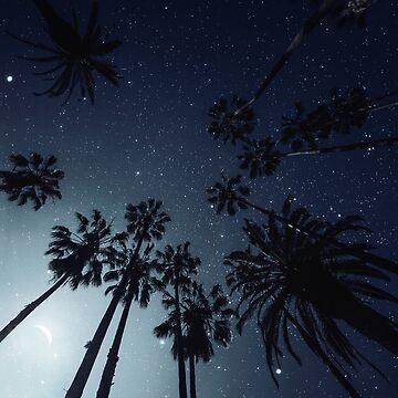 Palmen, Nachthimmel, Sterne, Mond von va103