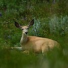 92317 deer by pcfyi