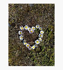 Saying it with Daisies Photographic Print