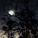 Dark Forest by Victoria Avvacumova