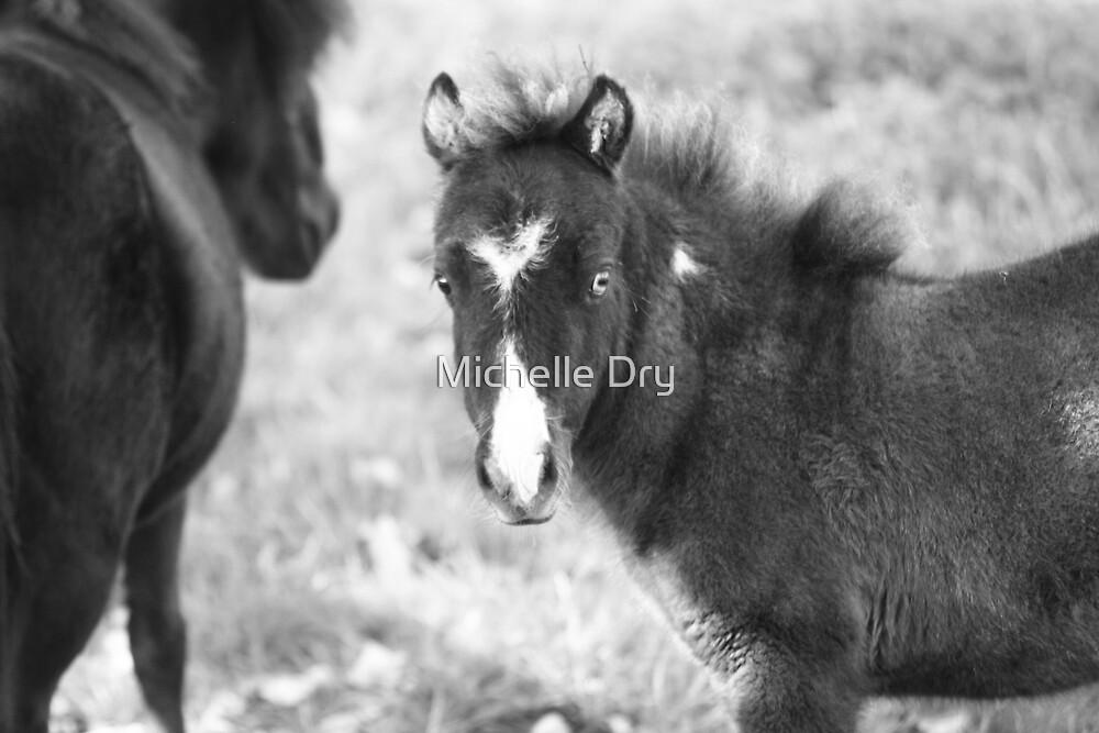 Teeny weeny horses by Michelle Dry
