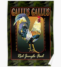 Gallus Gallus International Poster