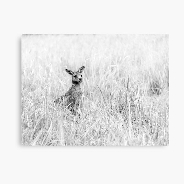 'Roo Canvas Print