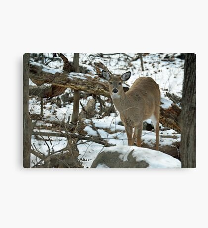 Whitetail Deer Doe in Snow Canvas Print