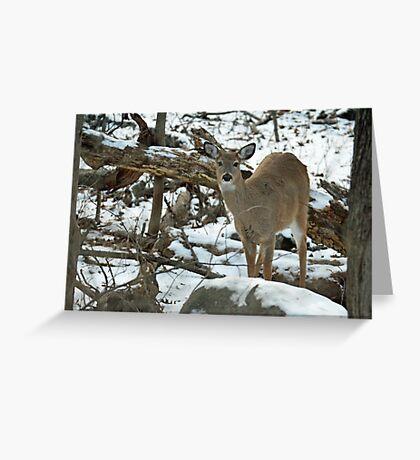 Whitetail Deer Doe in Snow Greeting Card
