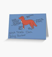 Nova Scotia Duck Tolling Retriever Greeting Card