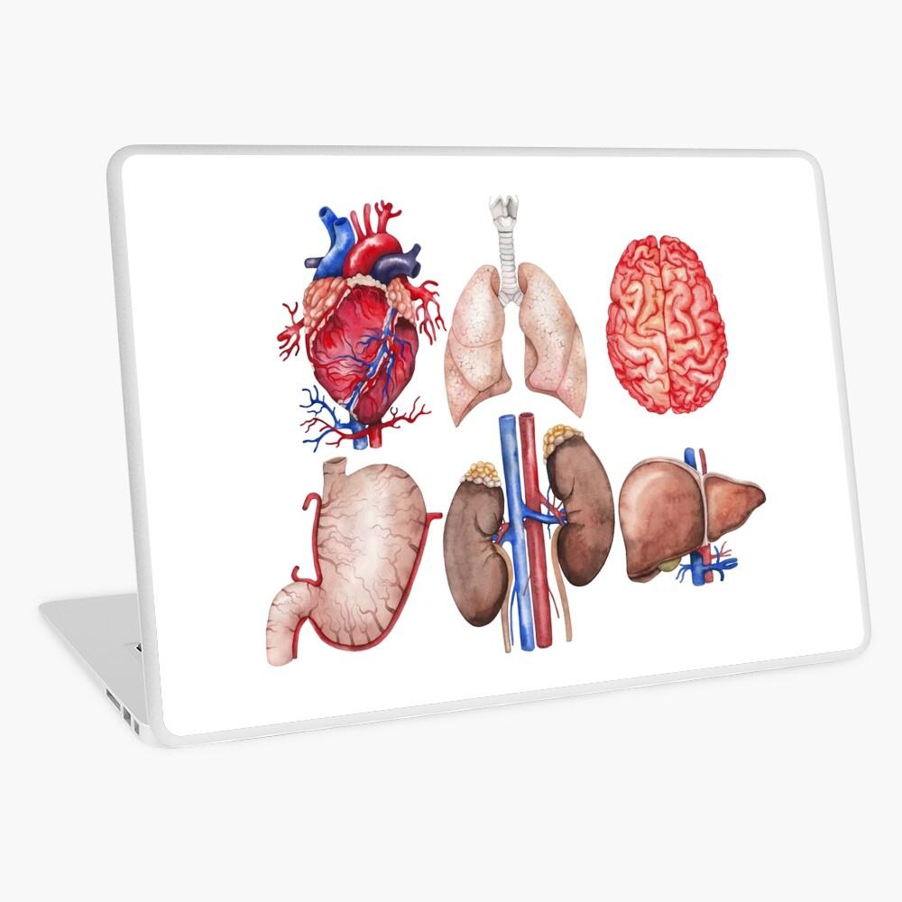 Colección de anatomía de acuarela Vinilo para portátil