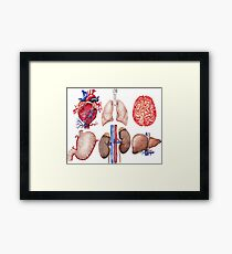 Watercolor anatomy collection Framed Print
