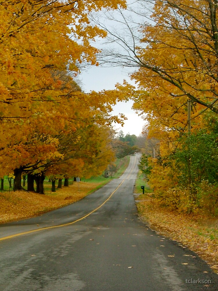 road in autumn by tclarkson