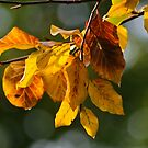 Autumn Stickers III by Nature Flicks