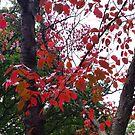 Autumn Sticker V by Nature Flicks