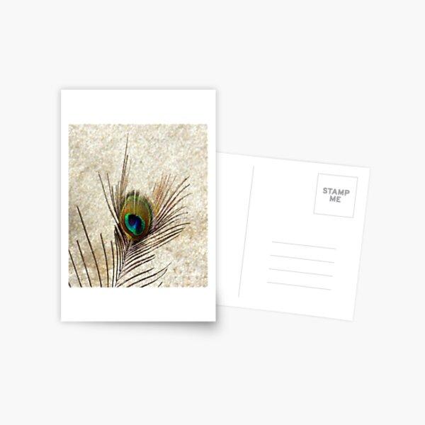 The Peacock Dude! #3 Postcard