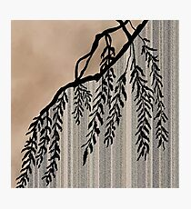 Pinstripe, Willow, and clouds Photographic Print