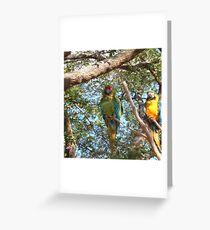 Beautiful Parrots Greeting Card