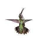 Little Showgirl Hummingbird by Bonnie T.  Barry