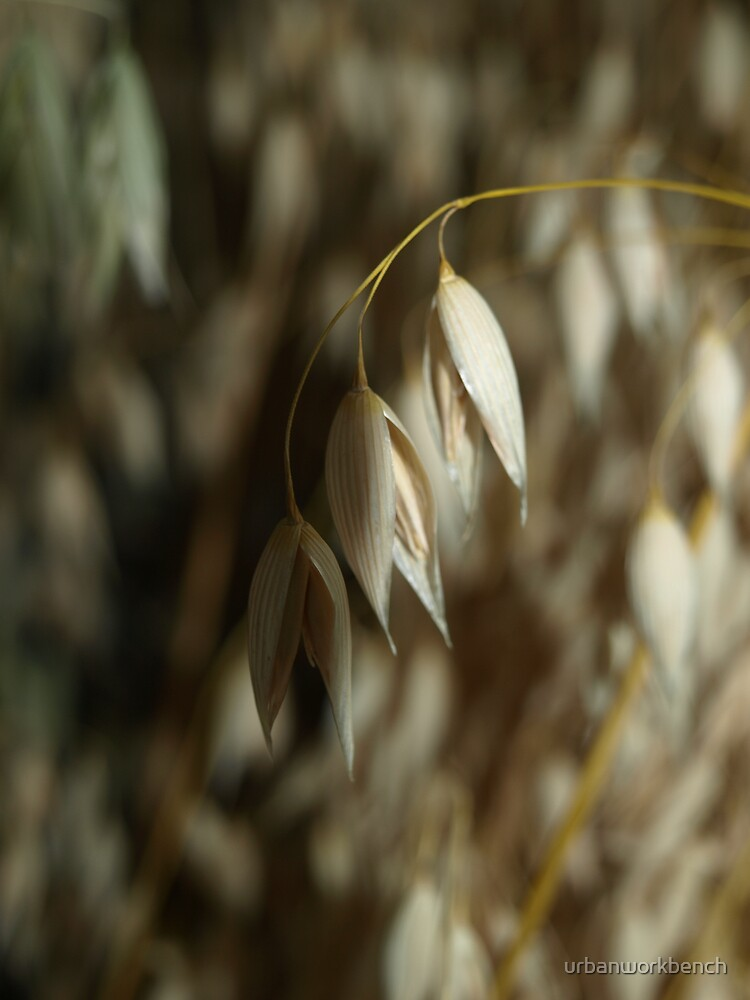 Sow Your Oats by urbanworkbench