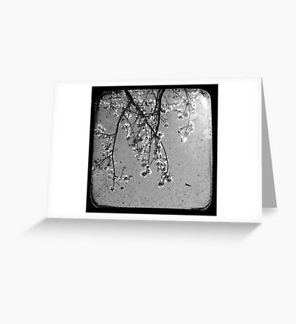 Blossoms in Black & White - Through The Viewfinder Greeting Card