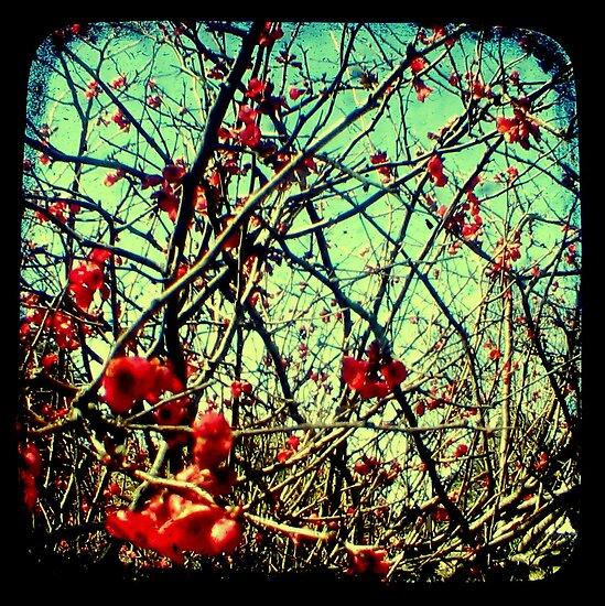Blossom Frenzy - TTV by Kitsmumma