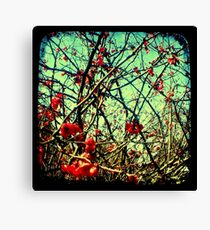 Blossom Frenzy - TTV Canvas Print