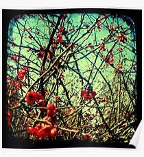 Blossom Frenzy - TTV Poster