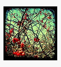 Blossom Frenzy - TTV Photographic Print
