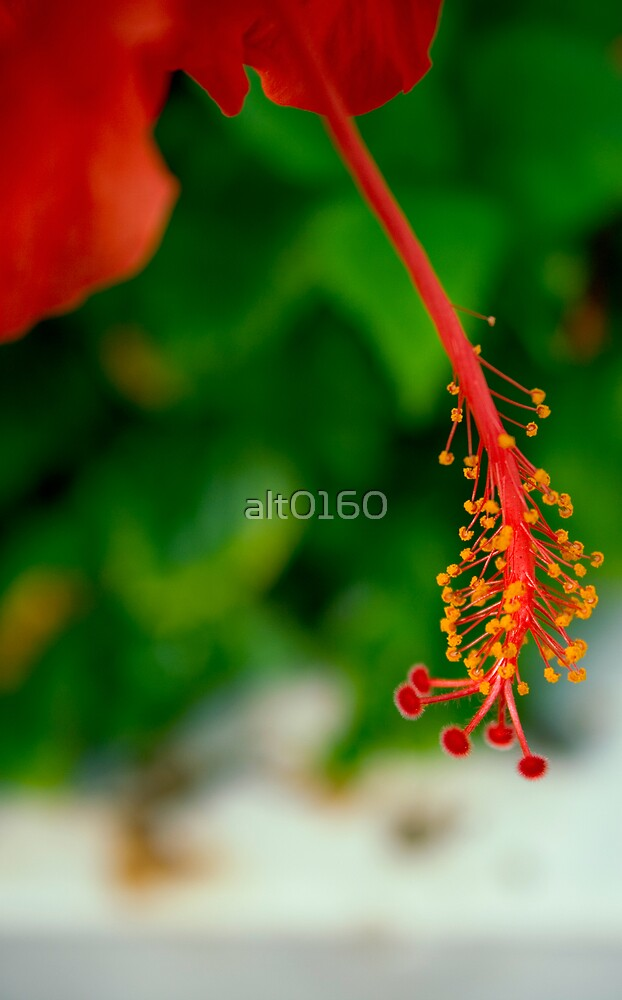 Beauty by alt0160