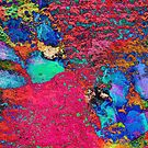 Paw Prints Colour Explosion by Dorothy Berry-Lound