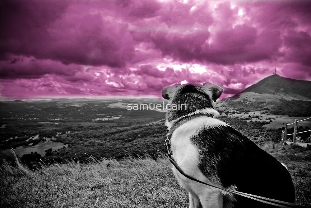 whortleberry sky by samuelcain