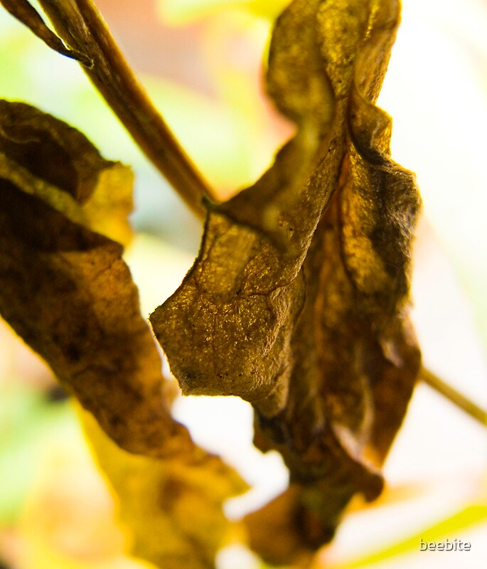 Dried leaf by beebite