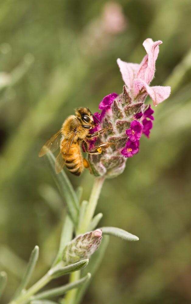 Purple honey by Tanie m